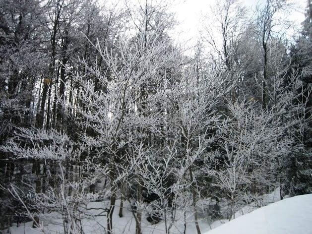 Narnia like Swiss