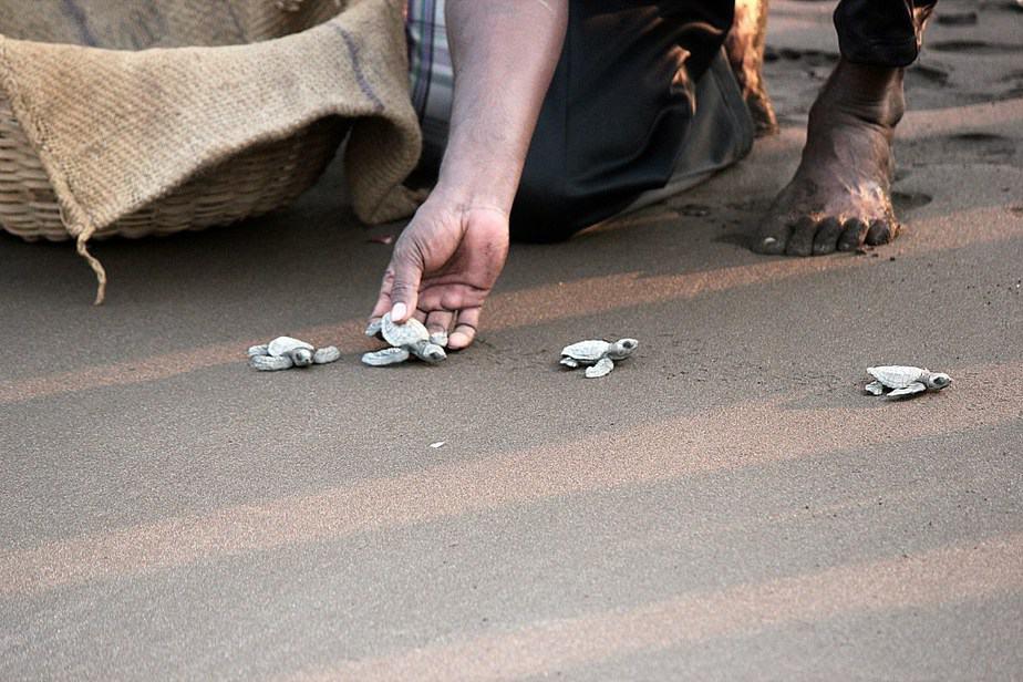 Velas Turtle Festival, Cyril Thomas, Weekend Getaway from Mumbai