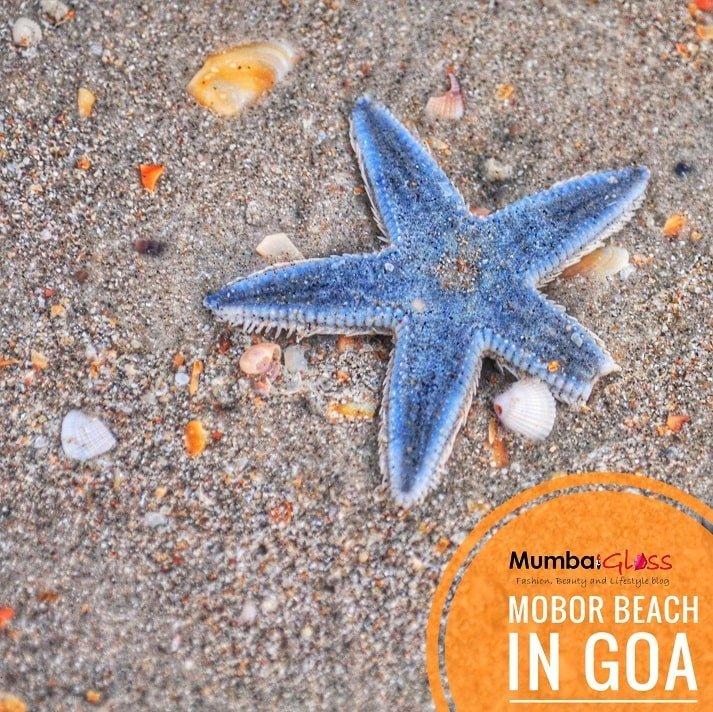 best south goa beach, mobor beach goa, starfish goa